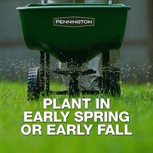 Best Grass Seed for Northern Virginia